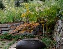 Zen garden with potted Japanese maple