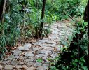 A stone pathway meanders through the bamboo grove