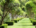 An 'allee' of lemon and olive trees seperates the jumping arena from the main garden while providing pedestrian direction