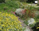 Constantia 1 - waterwise/ wildlife friendly garden