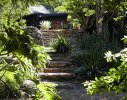 Hout Bay Residence1- Stone stairway leading to Koi pond and lower garden