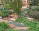 Hout Bay 2 - waterwise garden